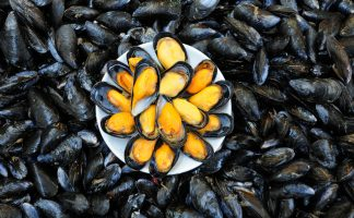 活藍青口 (Live Blue mussels)