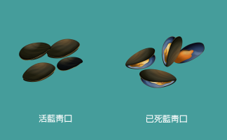 Blue mussel comparison