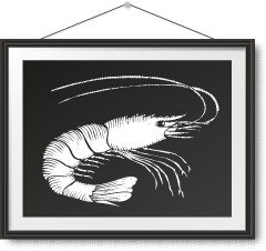 急凍野生西班牙大紅蝦 Frozen Wild Caught Carabinero Shrimp Photo Frame