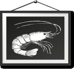 急凍野生西班牙大紅蝦 Frozen Wild Caught Carabinero Shrimp Photo Frame