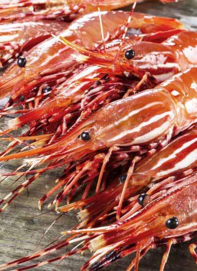 刺身級野生牡丹蝦 (Spot Shrimp Sashimi)