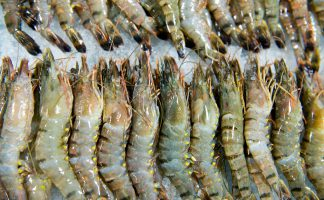 Raw Tiger Prawn Freshness