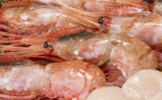 Botan shrimp freshness 2