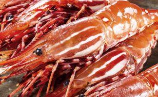 刺身級野生牡丹蝦 (Spot Shrimp Sashimi) freshness