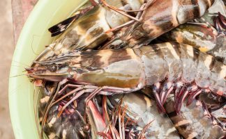 Raw Tiger Prawn Freshness 2