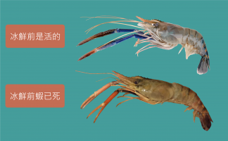Vietnam giant river prawn freshness comparison(M res)