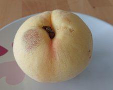 日本水蜜桃