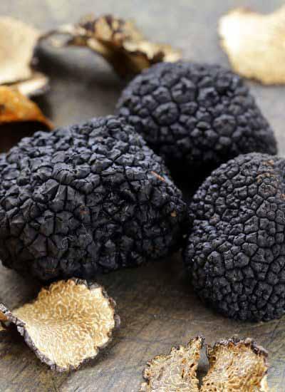 Perigord Black Truffle Head Pic